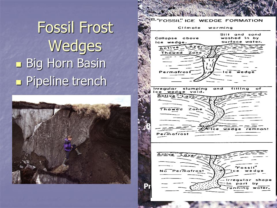 Fossil Frost Wedges Big Horn Basin Pipeline trench