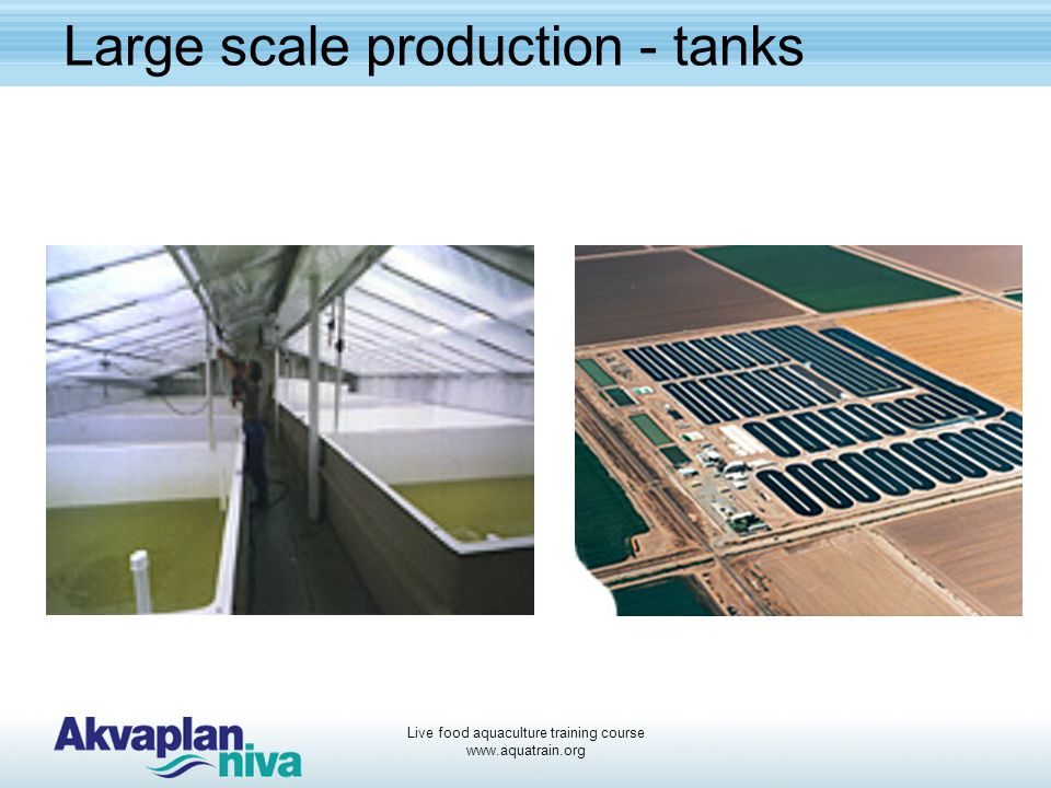 Large scale production - tanks