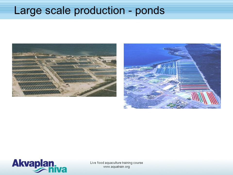 Large scale production - ponds