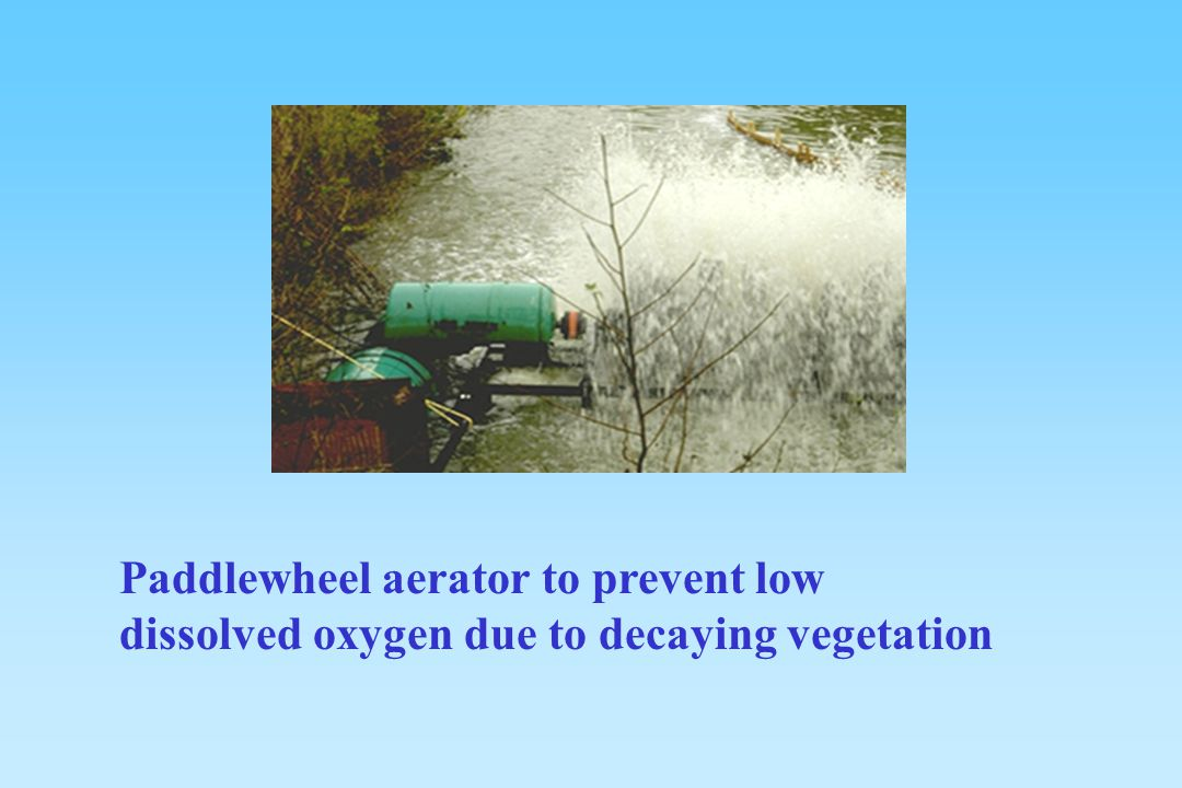 Paddlewheel aerator to prevent low