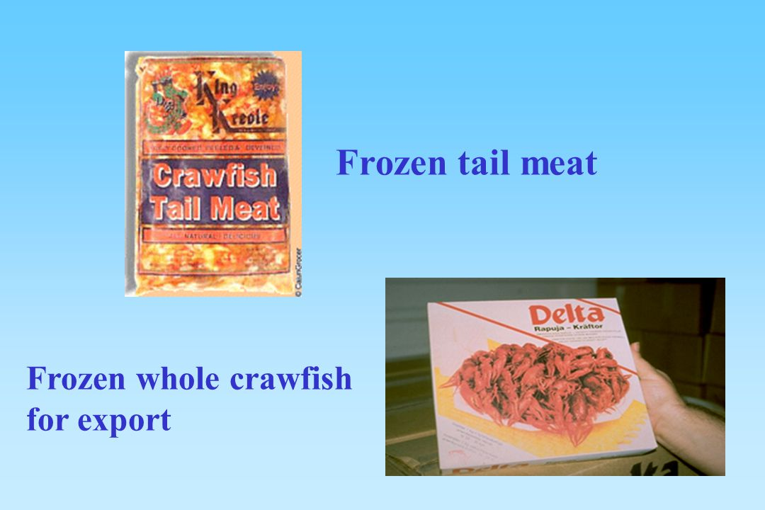 Frozen tail meat Frozen whole crawfish for export