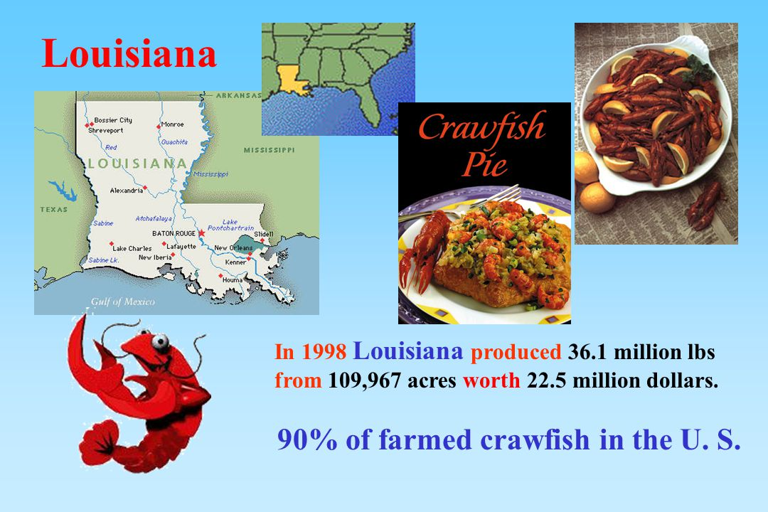 90% of farmed crawfish in the U. S.