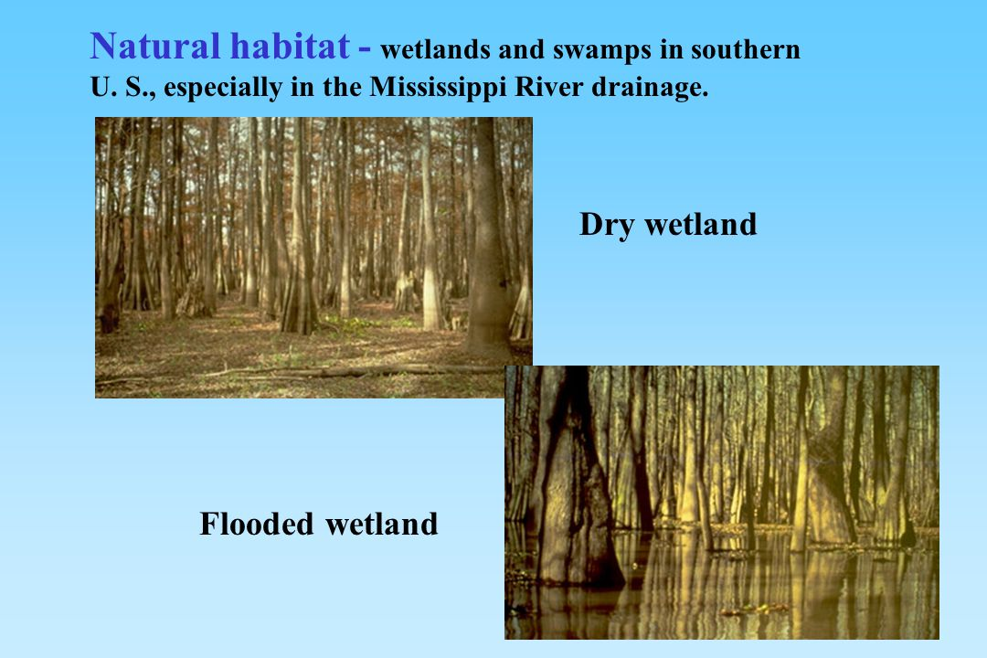 Natural habitat - wetlands and swamps in southern