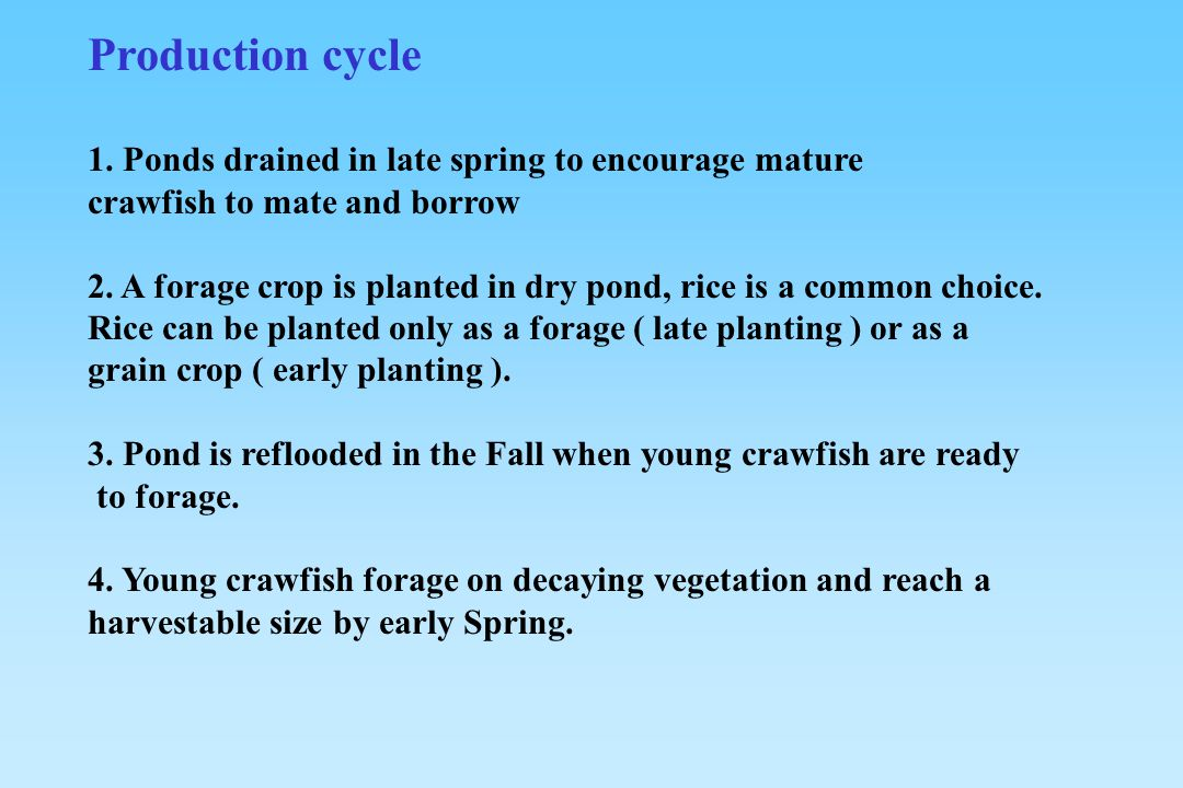 Production cycle 1. Ponds drained in late spring to encourage mature