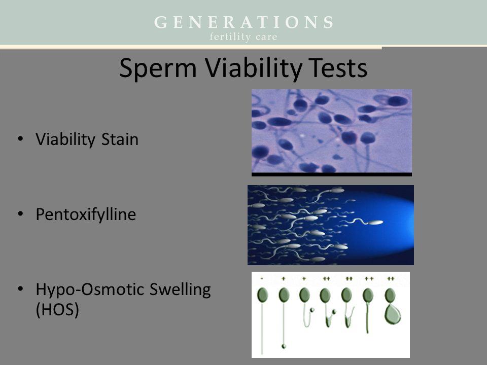 Sperm Viability Tests Viability Stain Pentoxifylline