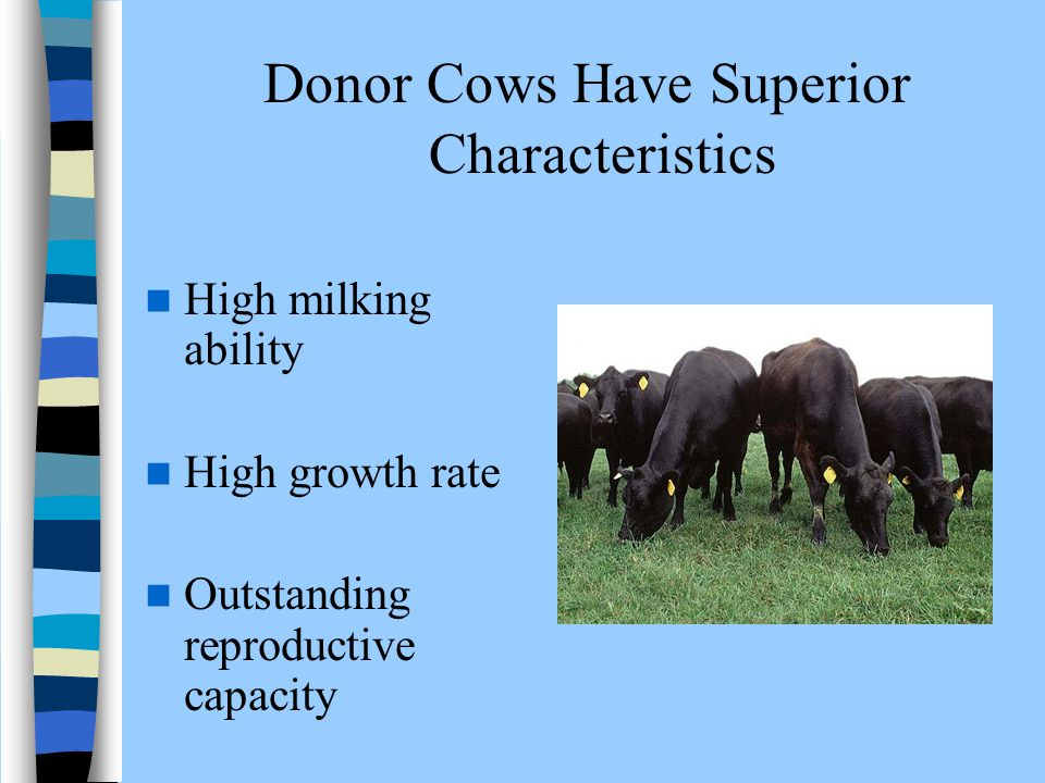 Donor Cows Have Superior Characteristics