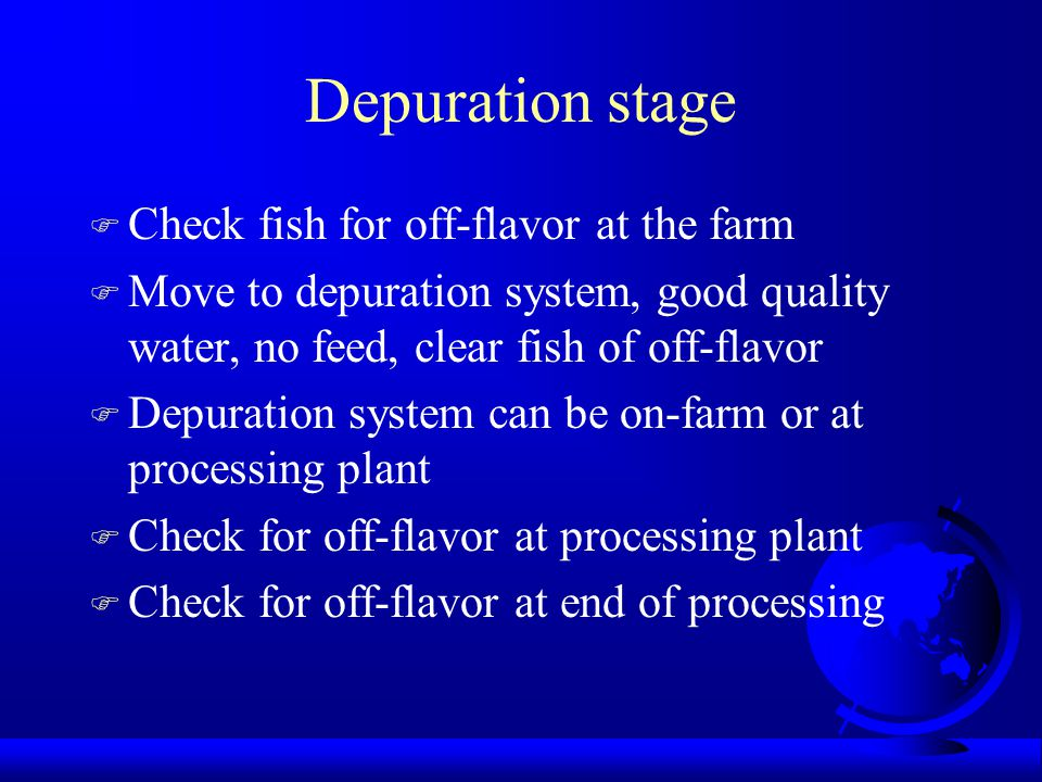 Depuration stage Check fish for off-flavor at the farm