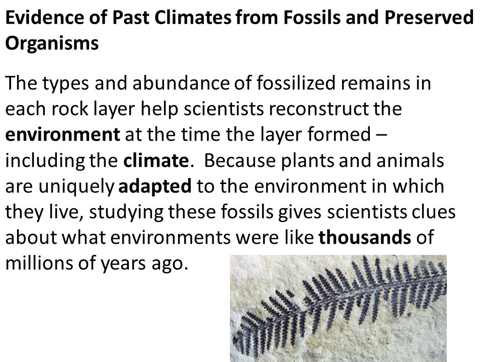 Evidence of Past Climates from Fossils and Preserved Organisms