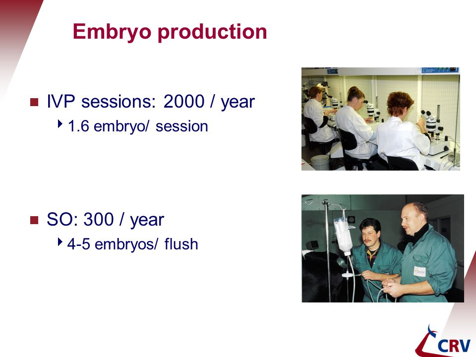 Embryo production IVP sessions: 2000 / year SO: 300 / year