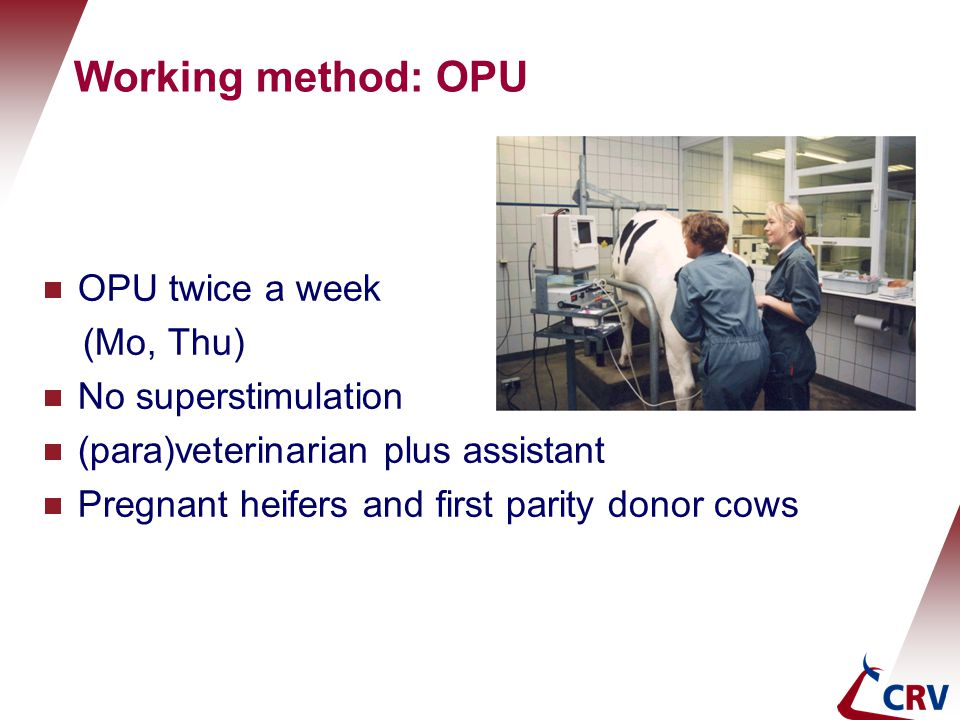 Working method: OPU OPU twice a week (Mo, Thu) No superstimulation