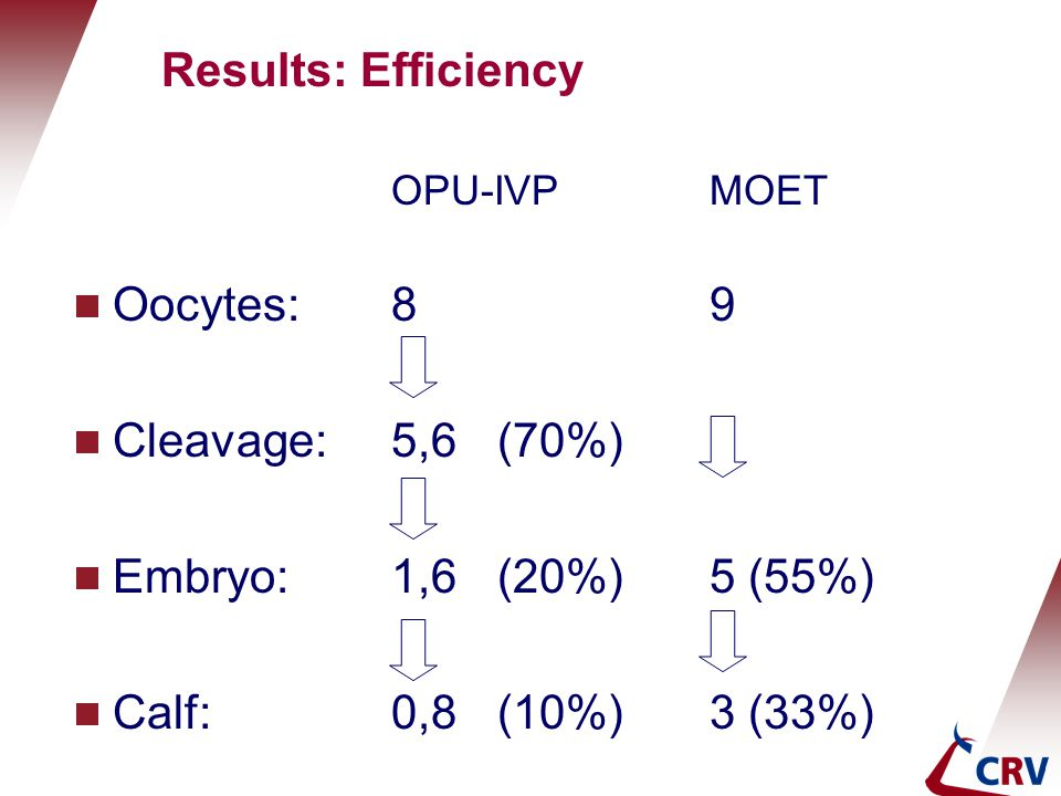 Results: Efficiency Oocytes: 8 9 Cleavage: 5,6 (70%)