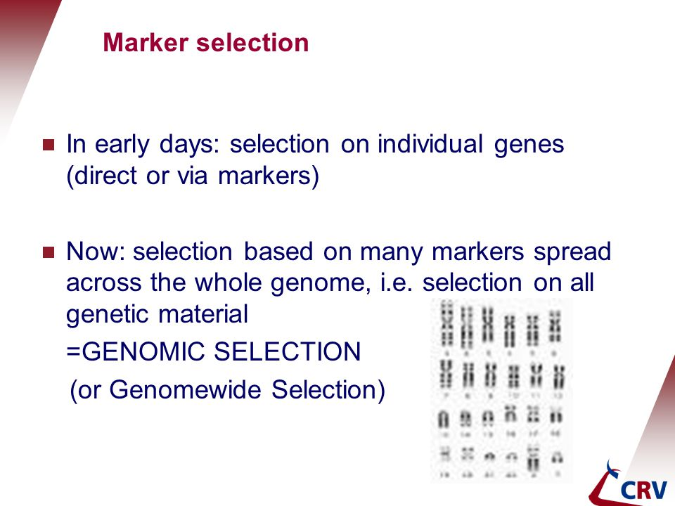 Marker selection In early days: selection on individual genes (direct or via markers)