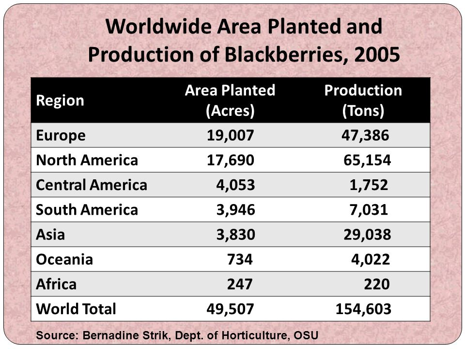 Worldwide Area Planted and Production of Blackberries, 2005