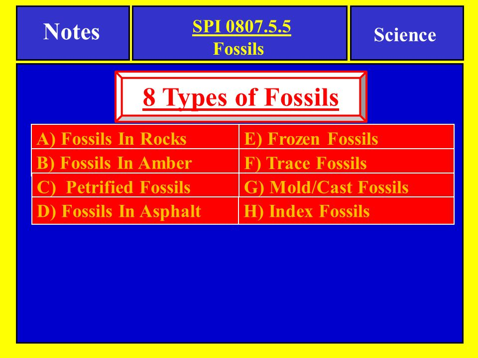 8 Types of Fossils Notes Science Fossils A) Fossils In Rocks