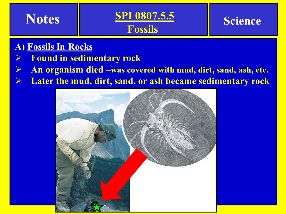 Notes Science Fossils A) Fossils In Rocks Found in sedimentary rock