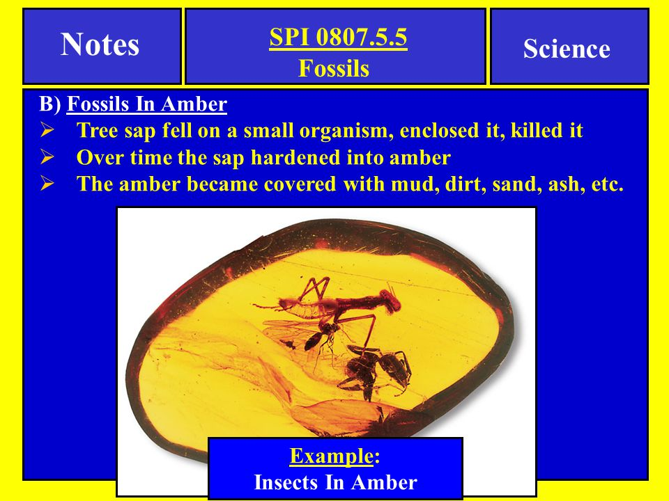 Notes Science Fossils B) Fossils In Amber