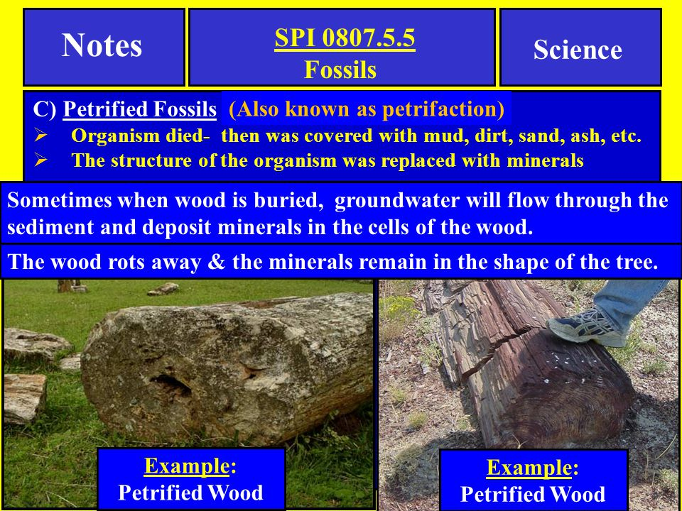 Notes Science Fossils C) Petrified Fossils