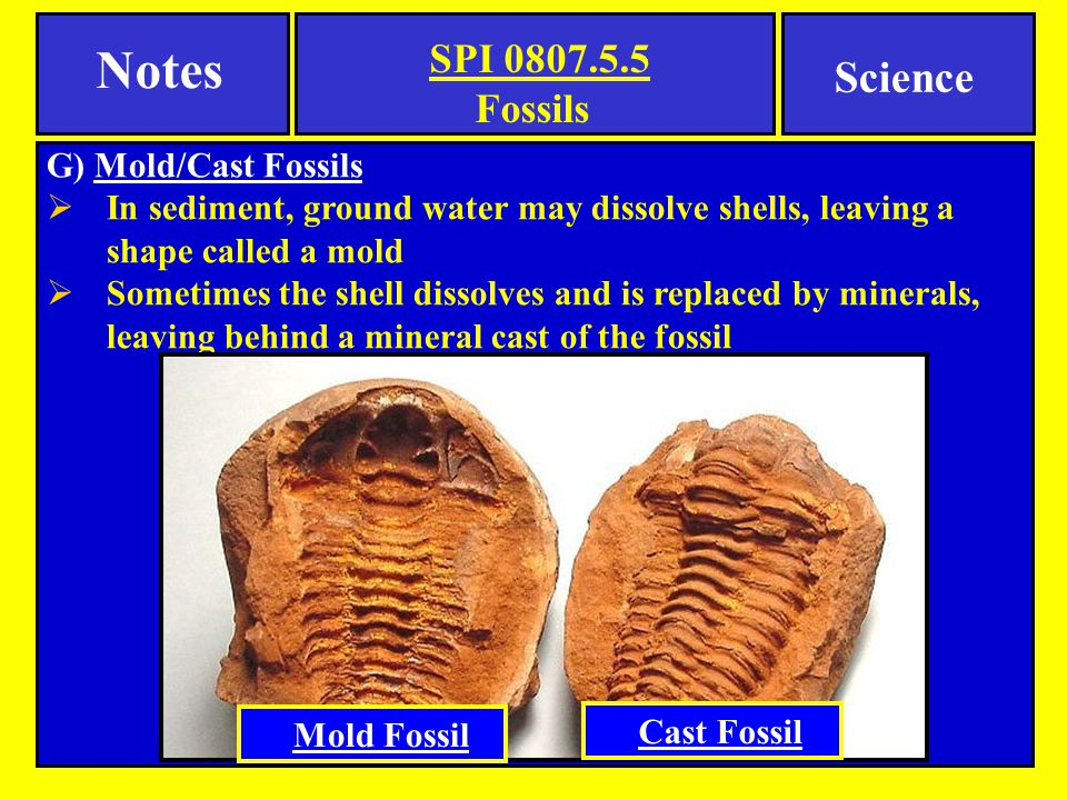 Notes Science Fossils G) Mold/Cast Fossils