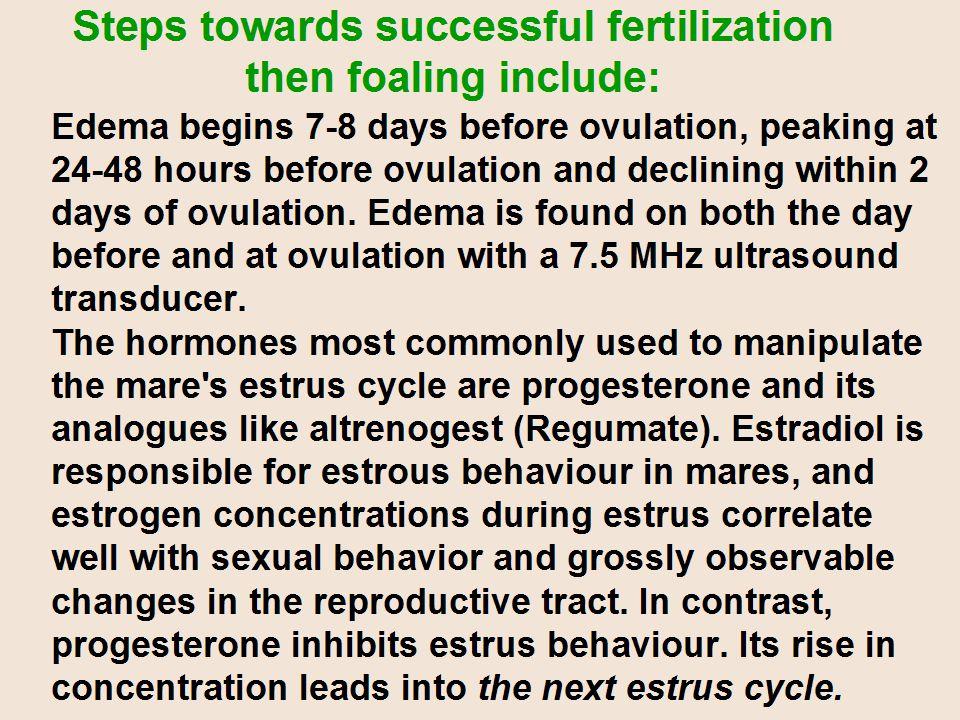 Steps towards successful fertilization then foaling include:
