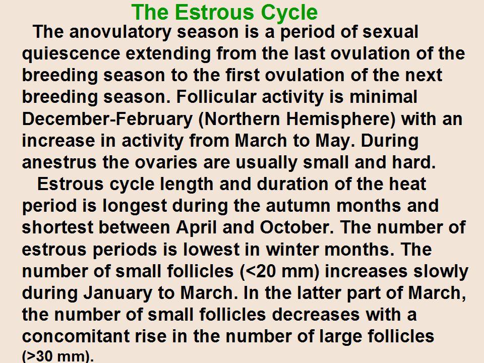 The Estrous Cycle
