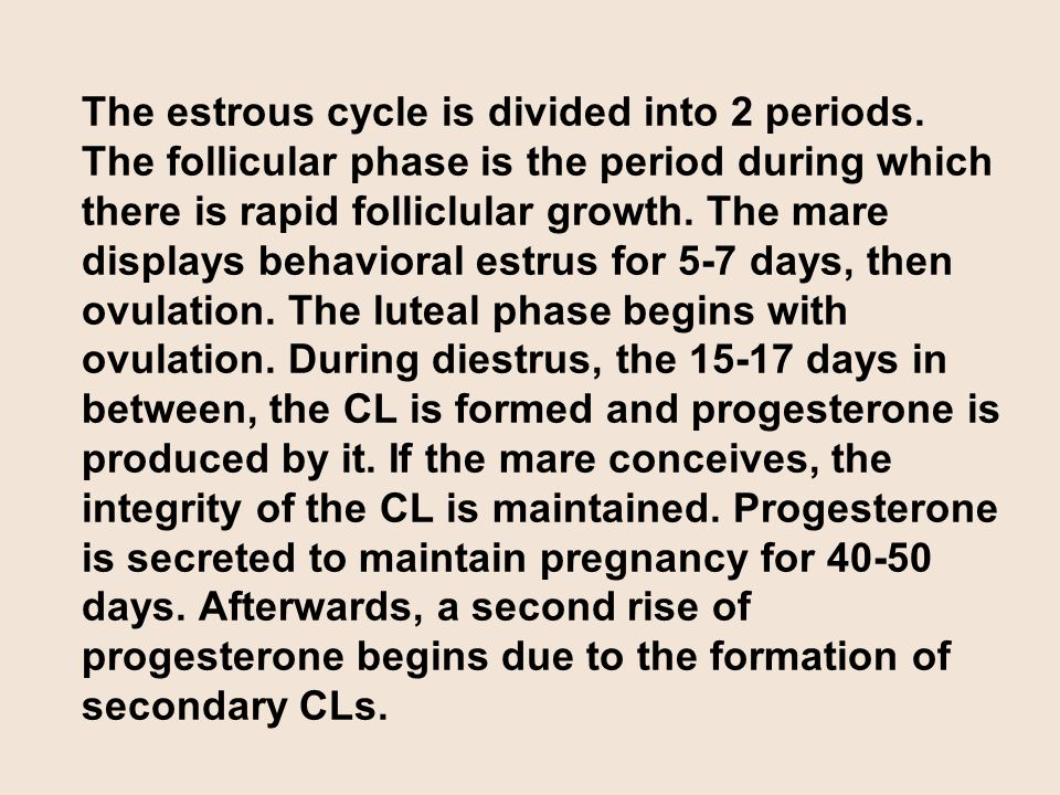 The estrous cycle is divided into 2 periods