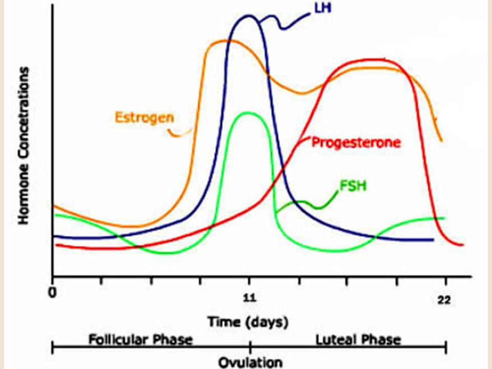 Maternal progesterone secretion is necessary for some 100 days of gestation. Afterwards, pregnancy can be maintained by progesterons produced by the fetal-placental unit.