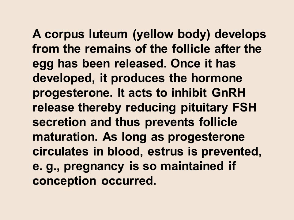 A corpus luteum (yellow body) develops from the remains of the follicle after the egg has been released. Once it has developed, it produces the hormone progesterone. It acts to inhibit GnRH release thereby reducing pituitary FSH secretion and thus prevents follicle maturation. As long as progesterone circulates in blood, estrus is prevented, e. g., pregnancy is so maintained if conception occurred.
