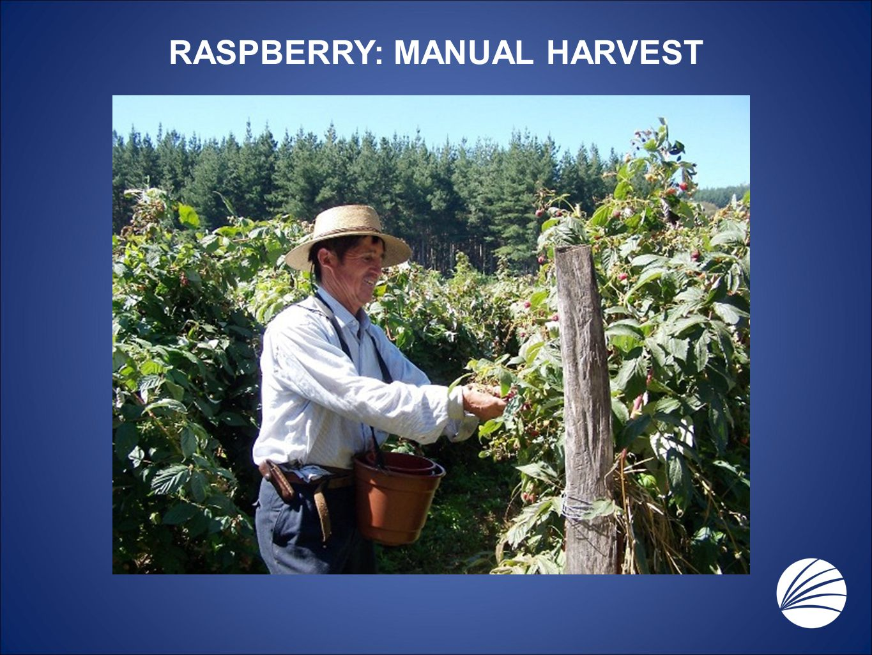 RASPBERRY: MANUAL HARVEST