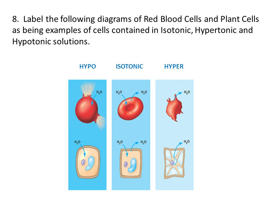 8. Label the following diagrams of Red Blood Cells and Plant Cells as being examples of cells contained in Isotonic, Hypertonic and Hypotonic solutions.