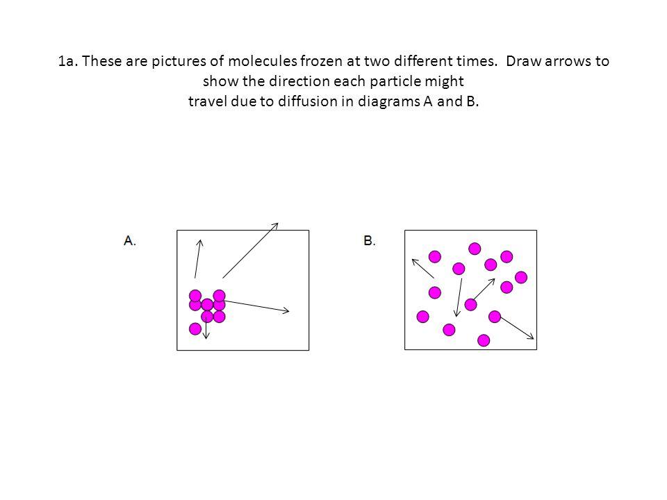 Diffusion And Osmosis Worksheet 2 1a