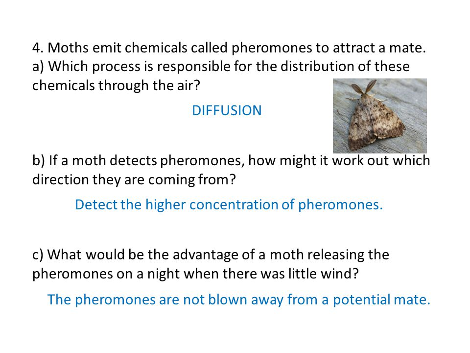 4. Moths emit chemicals called pheromones to attract a mate.