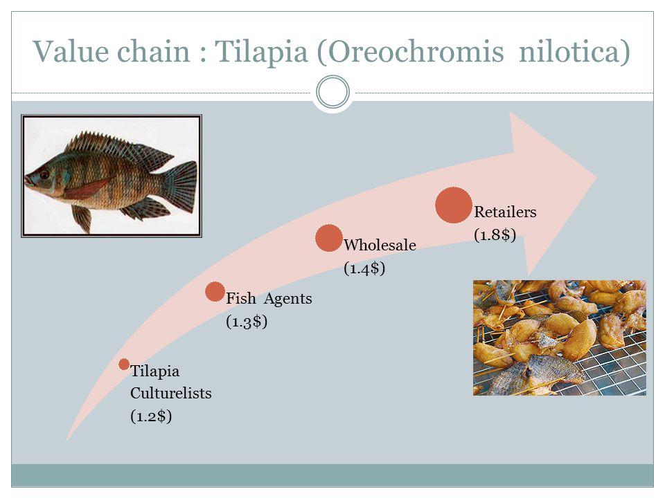 Value chain : Tilapia (Oreochromis nilotica)