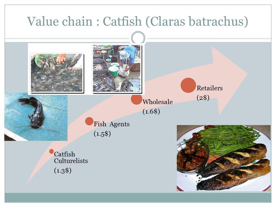 Value chain : Catfish (Claras batrachus)