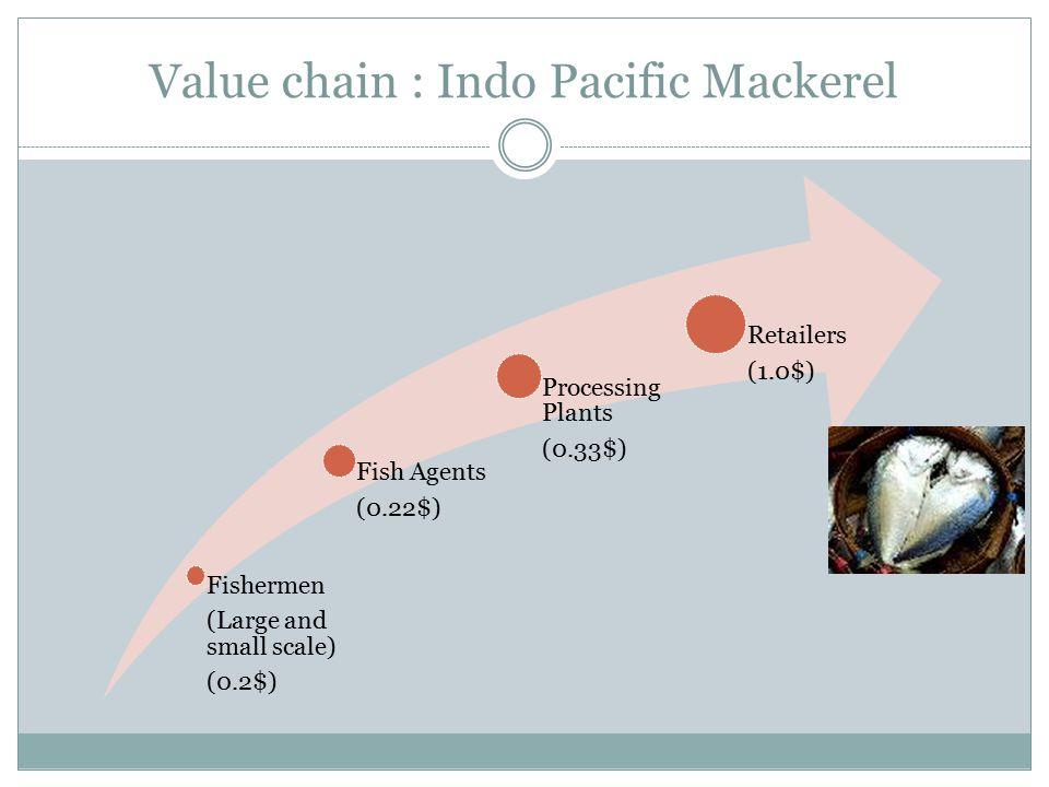 Value chain : Indo Pacific Mackerel