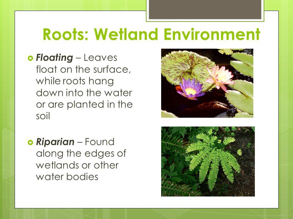 Roots: Wetland Environment