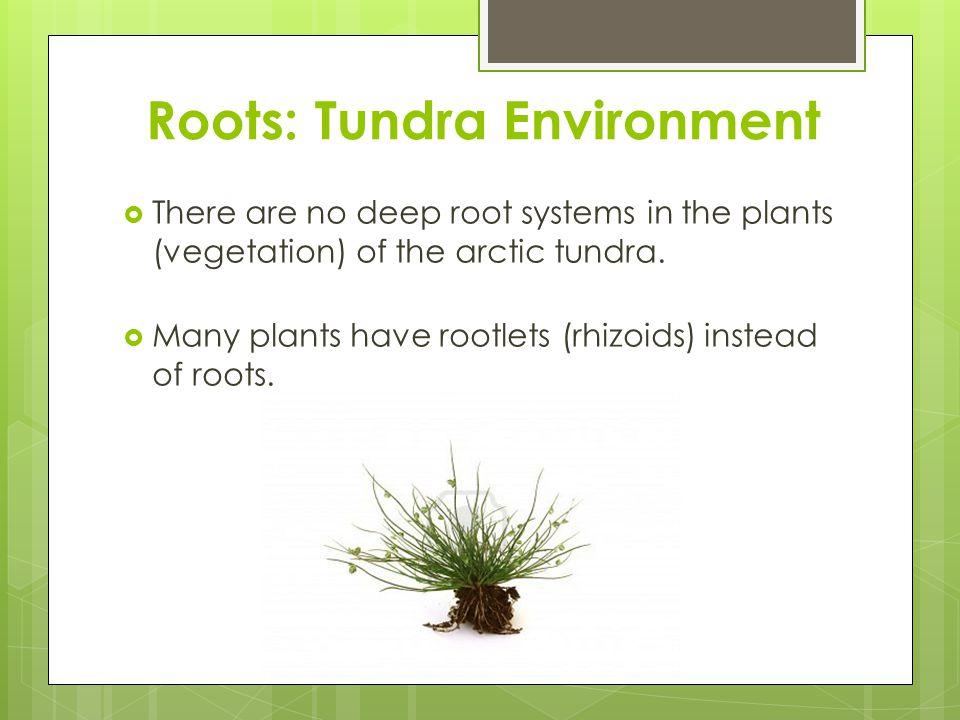 Roots: Tundra Environment