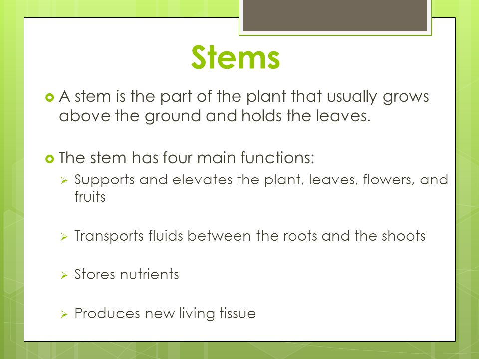 Stems A stem is the part of the plant that usually grows above the ground and holds the leaves. The stem has four main functions: