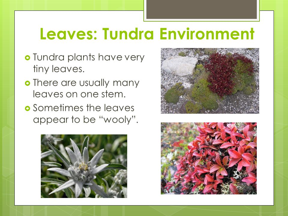Leaves: Tundra Environment