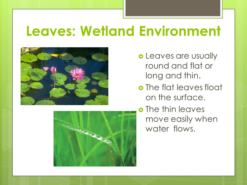 Leaves: Wetland Environment
