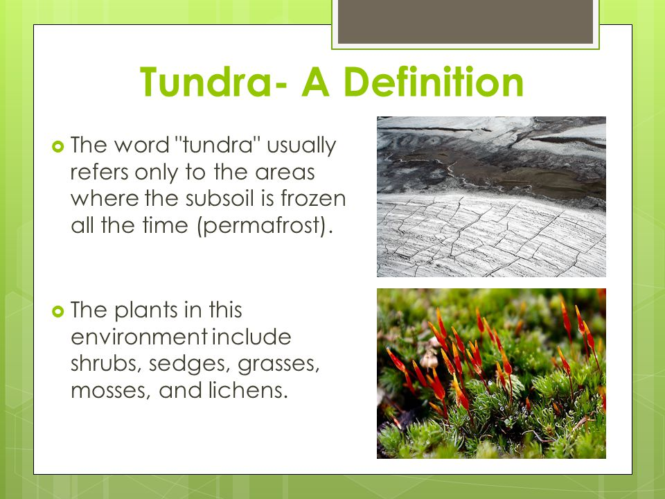 Tundra- A Definition The word tundra usually refers only to the areas where the subsoil is frozen all the time (permafrost).