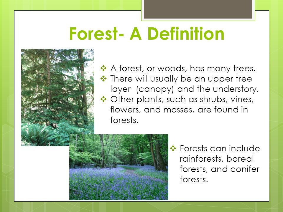Forest- A Definition A forest, or woods, has many trees.