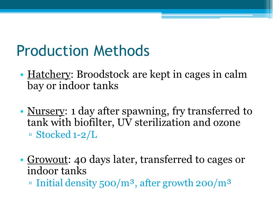 Production Methods Hatchery: Broodstock are kept in cages in calm bay or indoor tanks.