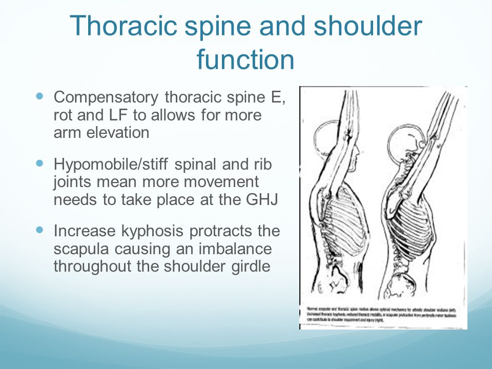Thoracic spine and shoulder function