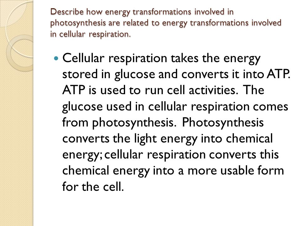 Describe how energy transformations involved in photosynthesis are related to energy transformations involved in cellular respiration.