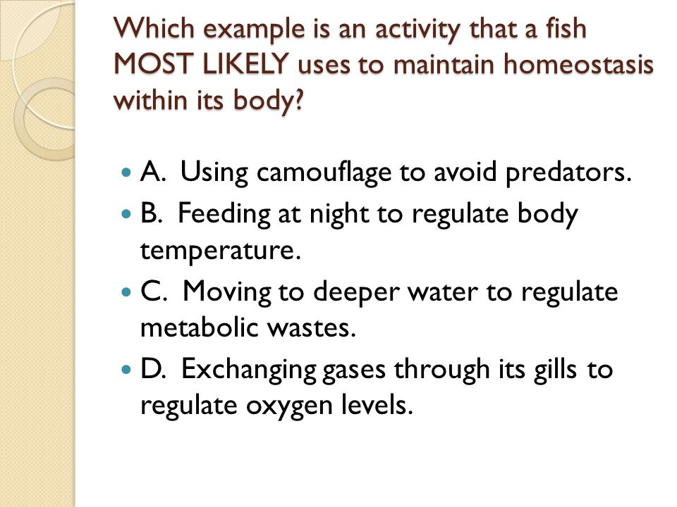 Which example is an activity that a fish MOST LIKELY uses to maintain homeostasis within its body