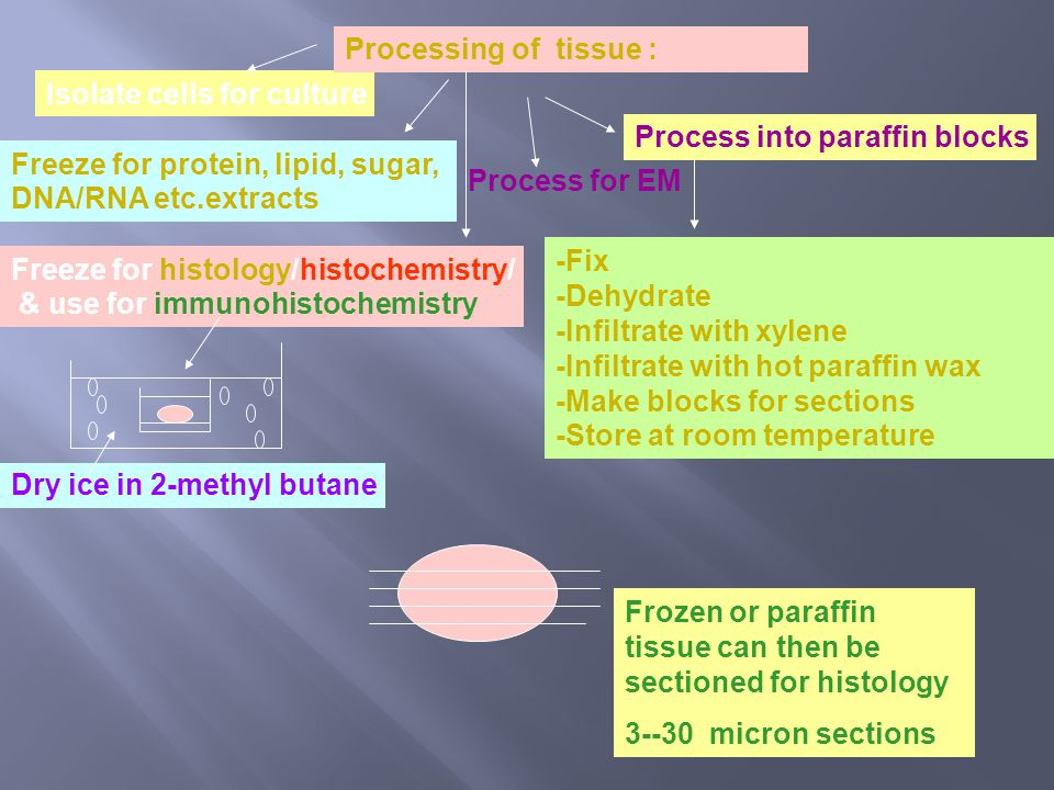 Processing of tissue : Freeze for protein, lipid, sugar, DNA/RNA etc.extracts. Isolate cells for culture.