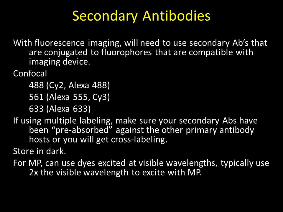 Secondary Antibodies