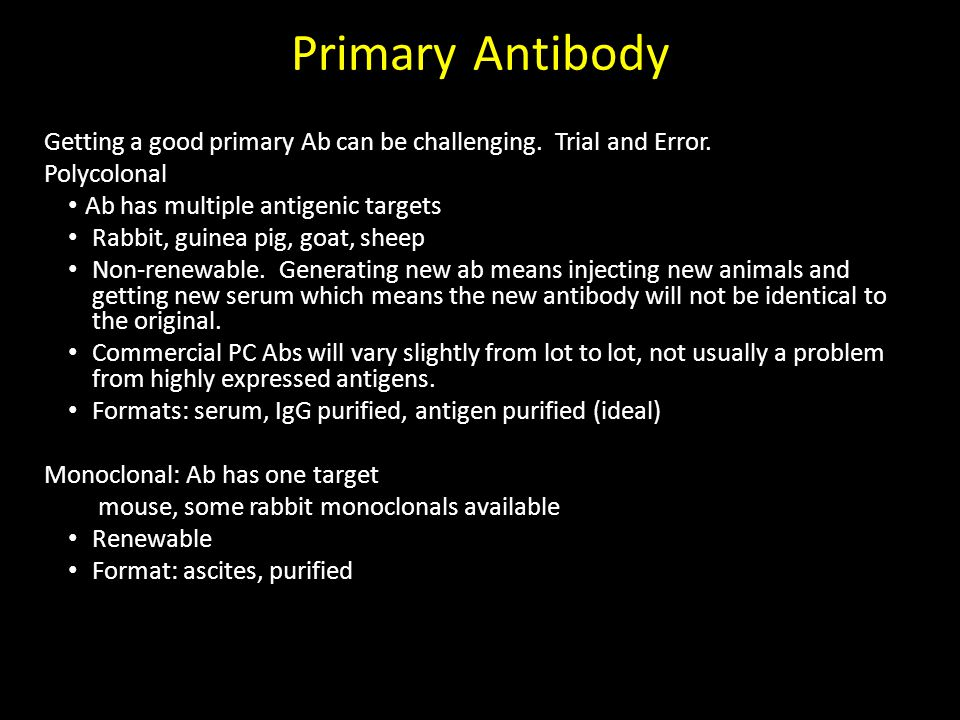 Primary Antibody Getting a good primary Ab can be challenging. Trial and Error. Polycolonal. Ab has multiple antigenic targets.