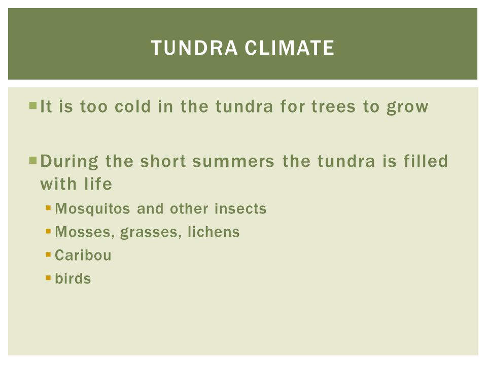 Tundra climate It is too cold in the tundra for trees to grow