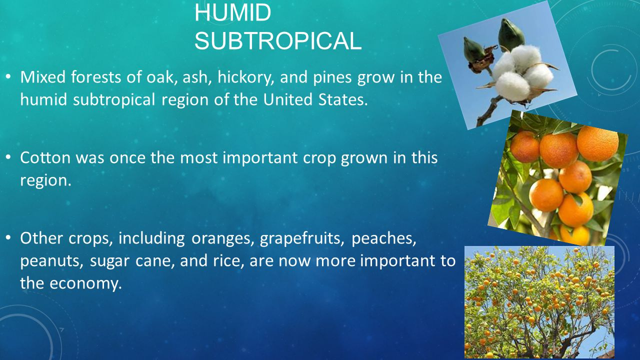 Humid Subtropical Mixed forests of oak, ash, hickory, and pines grow in the humid subtropical region of the United States.